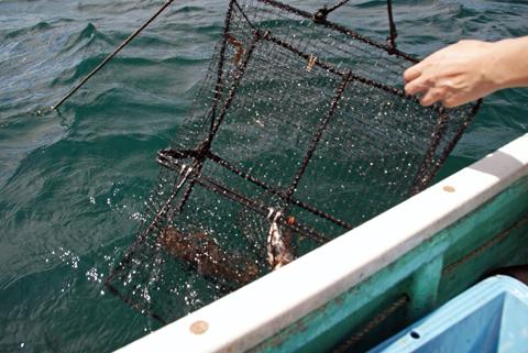 蛸籠引き上げ