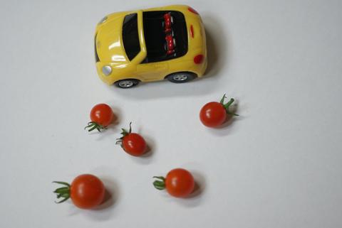 マイクロトマトの画像